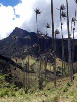 Valle de Cocoras (22)