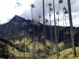 Valle de Cocoras (23)