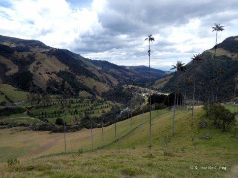 Valle de Cocoras (25)