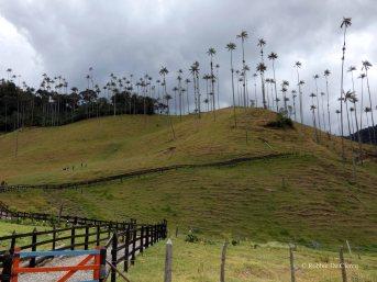 Valle de Cocoras (27)