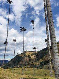 Valle de Cocoras (3)