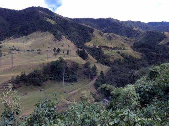 Valle de Cocoras (7)