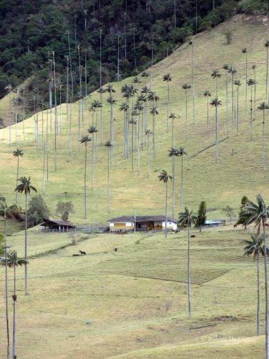 Valle de Cocoras (8)