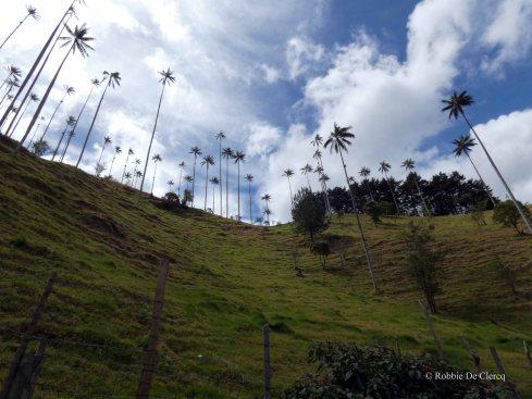 Valle de Cocoras (9)